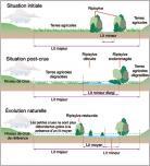 Fig. 3 -Schéma de principe des conséquences de l'élargissement du lit mineur sur les crues (d'après IRMA - Institut des Risques Majeurs).