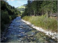 Fig. 6 -Exemple de technique végétale appliquée aux berges de rivières de montagne (Sud Tyrol- Italie).