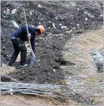 Fig.1 - Mise en place des plançons de saule sur un des chantiers pilotes de Géni'Alp.