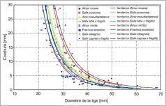 Fig. 9 - Comparaison de la courbure de différentes espèces d'arbres rivulaires sur des tiges d'un mètre soumises à une force latérale de 10N (Weitzer etal. 1998, dans Gerstgraser 2000) – arbres âgés de 5 à 18ans.