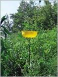 Fig.11 - Pièges «cuvette jaune» Flora®.