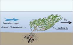 Fig.12 - Efforts mécaniques engendrés par le courant sur un arbuste immergé. Avec R, la force de résistance à l'arrachement, et MR, le couple résistant.