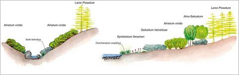 Fig.16 - Zonation transversale de la végétation sur substratum silicaté grossier à l'étage subalpin supérieur des Alpes pennines suisses (Suisse - Valais): (a)sur un cours d'eau encaissé; (b) sur un cours d'eau à chenal unique non encaissé. Source : Sartoretti (2009), modifié.