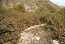 Fig. 2 - Fourré de saule fétide (Salix foetida) et de saule bleuâtre (S.caesia) à l'étage subalpin.