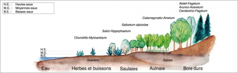 Fig.8 - Zonation transversale de la végétation selon les différentes lignes d'eau – Alpes du Nord helvétiques. Source: Moor (1958), modifié.