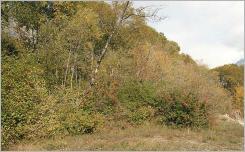 Fig.10 - L'aménagement des sommets de berge sur des substrats grossiers et filtrants nécessite une adaptation de la composition botanique à la xéricité de l'endroit, et l'implantation d'espèces mésophiles, voire xérophiles, même en contexte alluvial.
