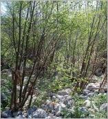 Fig.8- Situation en terrasse alluviale sur substrat grossier.