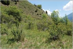 Fig.7- Situation typique (Berberidion) en mosaïque avec une pelouse steppique.