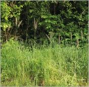 Fig.7- Situation typique en lisière forestière.
