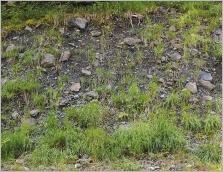 Fig.7- Situation sur loupe de glissement.