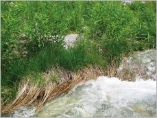 Fig.7- Situation en pied de berge d'un torrent de montagne permettant la dissipation de l'énergie du courant.