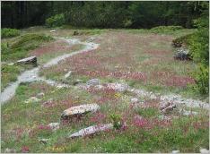 Fig.7- Situation typique sur substrat calcaire sec à l'étage subalpin.