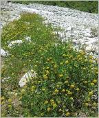 Fig.7- Situation pionnière en terrasse alluviale sur matériaux grossiers.